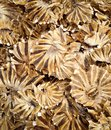 Salted fish in the market Stock Photography
