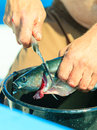 Saltwater fishing - man cleaning fish outdoor Royalty Free Stock Photo