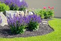 Salvia Flowers and Rock Retaining Wall Royalty Free Stock Photo