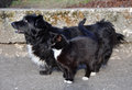 Same dog and cat the color a standing next huddled together Royalty Free Stock Photos