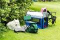 Samoyed resting white dog at camp site al alone Stock Photos