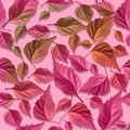 Sample_pink_leaves_photo Stock Photos