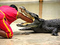 Samutprakan Crocodile Farm And...