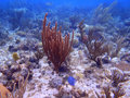 San andres island barrier reef colombia Stock Photography