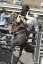 San Dimas Rodeo Saddle Bronc Stock Image