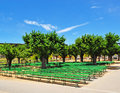 San Francisco, Music Concourse, Golden Gate Park, trees, bench, California, United States of America, Usa