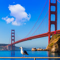 San Francisco Golden Gate Bridge seagull California Royalty Free Stock Photo