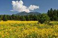 San Francisco Peaks Royalty Free Stock Photos