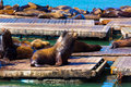 San francisco pier lighthouse and seals california at usa Royalty Free Stock Image