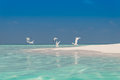 Beach Birds Royalty Free Stock Photo