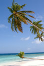 Sand beach and leaning coconut tree Stock Images