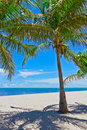 Sand beach with palm trees Royalty Free Stock Images