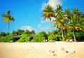 Sand Beach With Palm Trees And...