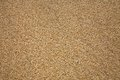 Sand beach texture close up Stock Photography