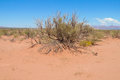 Sand desert with dry bush Royalty Free Stock Photo