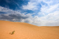 Sand desert and small grass Stock Photography