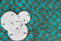 Sand dollar collage with fish net and teal blue board background Royalty Free Stock Photo