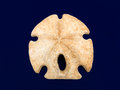 Sand Dollar Royalty Free Stock Photo