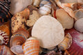 Sand dollar and sea shells Stock Image