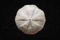 Sand dollar shell Royalty Free Stock Photo