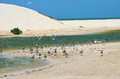Sand dune and birds at beach white terns flying blue sky Royalty Free Stock Images