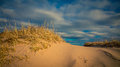 Sand dune grass Royalty Free Stock Photo