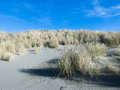 Sand dune stabilization example of canterbury new zealand Royalty Free Stock Photography