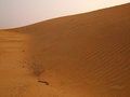 Sand dune at thar desert Stock Images