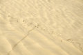 Sand dunes animal trails dune with beetle trail Stock Images