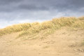 Sand dunes in Cannon Beach, Oregon Royalty Free Stock Photo