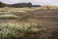 Sand dunes grass at karekare beach in new zealand Stock Image