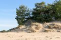 Sand dunes kootwijkerbroek netherlands drift trees and grass at Stock Photography