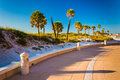 Sand dunes and palm trees along a path in Clearwater Beach, Flor Royalty Free Stock Photo