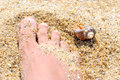 Sand foot shell Royalty Free Stock Photo