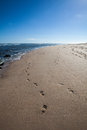 Sand footprints Royalty Free Stock Photo