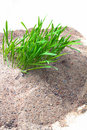 Sand grass Royalty Free Stock Images