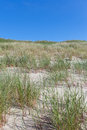 Sand and grass green in dry on baltic beach Royalty Free Stock Photography