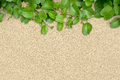 Sand and plant green on a flat surface of beach Royalty Free Stock Image