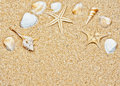 Sand and sea shells frame Royalty Free Stock Photo