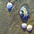 Sand seashells macro beach and wet with different Royalty Free Stock Photography