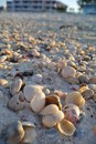 Sand and shells this is some in florida Royalty Free Stock Photos