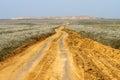 Sand spring steppe road