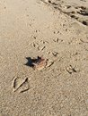 Sand stamped step bird on at lauderdale by the sea Royalty Free Stock Images