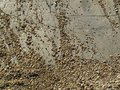 Sand and stone background Stock Image