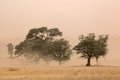 Sand storm severe in the kalahari desert south africa Royalty Free Stock Photos