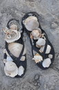 Sandals and Shells Royalty Free Stock Photo