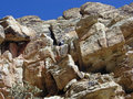 Sandstone Bluffs in Red Rock Canyon, Nevada. Royalty Free Stock Image