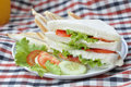 Sandwiches single whole isolated on white background Royalty Free Stock Image