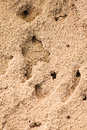 Sandy anthill with holes Royalty Free Stock Image