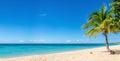 Sandy beach with coconut palm, Caribbean Island Royalty Free Stock Photo
